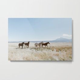 Colorado Wilds Metal Print