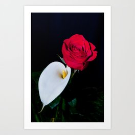 Calla Lily & Rose Art Print