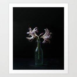 Resurrection Lily in a Vintage Bottle Art Print