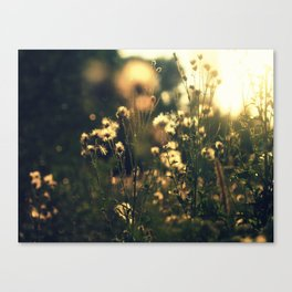 blured flowers Canvas Print