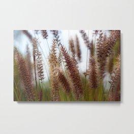 Summer Fountain Grass Metal Print