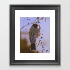 Robin 2 Framed Art Print