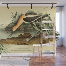 American Avocet Wall Mural