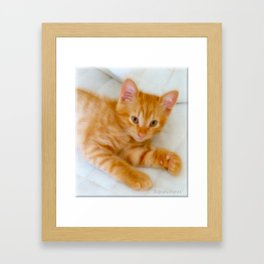 Quo - Kitten Photography By Giada Rossi Framed Art Print