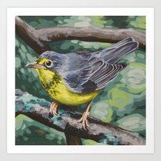 Canada Warbler Art Print