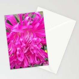 A Beautiful Pink Aster Stationery Cards