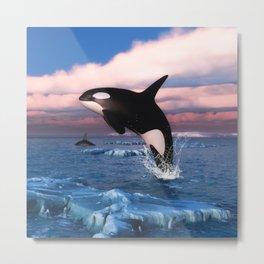 Killer whales in the Arctic Ocean Metal Print