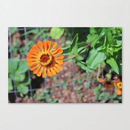 Flower No 5 Canvas Print