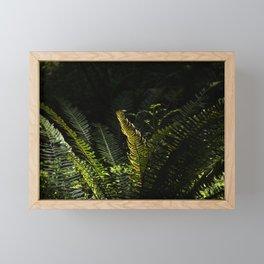 Sawtooth Fern Illuminated by Light in Oregon Forest Framed Mini Art Print