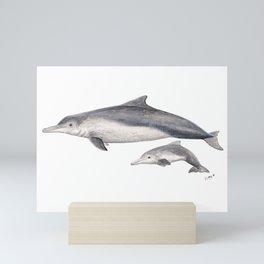 Australian humpback dolphin (Sousa sahulensis) with baby Mini Art Print