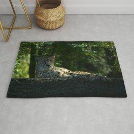 Resting Cheetah Rug