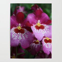 Tropical Flowers Orchids Poster