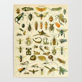 """Adolphe Millot """"Insectes"""" Nouveau Larousse 1905 Poster"""