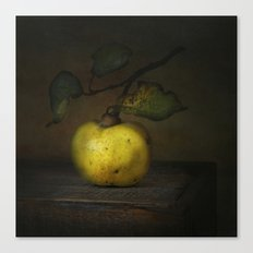 autumn fruit ( quince ) Canvas Print