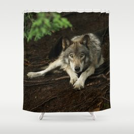 Intense Timber Wolf Shower Curtain