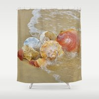 shells Shower Curtains featuring Shells by Beach Bum Pics