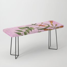 Hummingbird with Trumpet Vine, Vintage Natural History Collage Bench