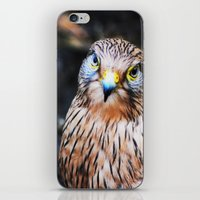 falcon iPhone & iPod Skins featuring Falcon by Amee Cherie Piek