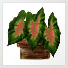 Potted Big Green Pink Leaves Art Print