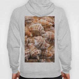 Seashells collection background Hoody