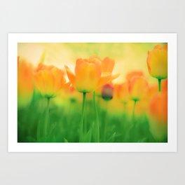 To Gather Orange Blossom Art Print