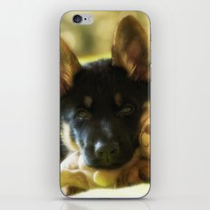 Shepherd puppy looks so tired iPhone & iPod Skin