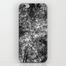 The Dark Forest Path iPhone Skin