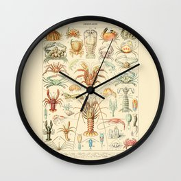 Sea Creatures // Crustaces by Adolphe Millot 19th Century Science Textbook Diagram Artwork Wall Clock