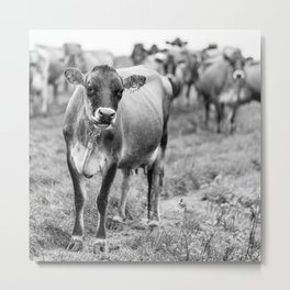 Dairy Cow Stowe Vermont Black and White Square Metal Print