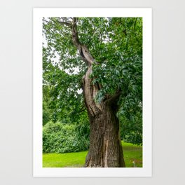 Broadleaf Tree in a Park Art Print