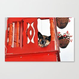 Sad Dog In Red Balcony. Canvas Print