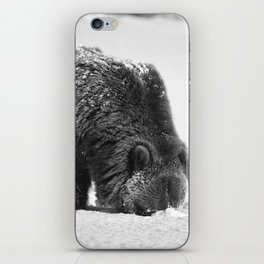 Alaskan Grizzly Bear in Snow, B & W - 2 iPhone Skin