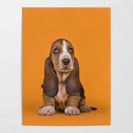 Cute basset puppy in orange Poster
