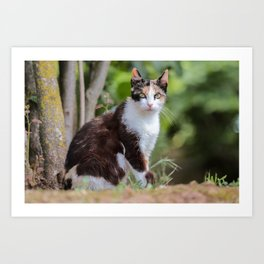 Are you meowing to me? Art Print
