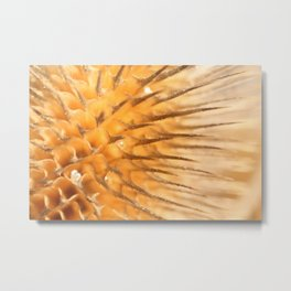 Dried plant Thorns and Prickles Metal Print