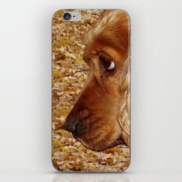 Dog Cocker Spaniel iPhone Skin