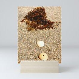 Sea Shells Sea Weed by the Sea Shore Mini Art Print
