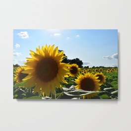 Sunflowers & Sunshine Metal Print