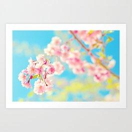 Spring Cherry Blossom Art Print