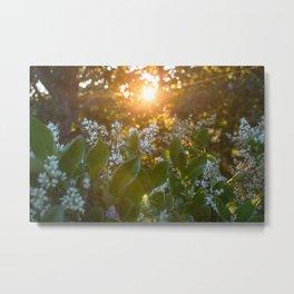 Sunset through the flowers Metal Print