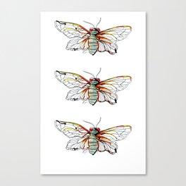 Cicada I Canvas Print