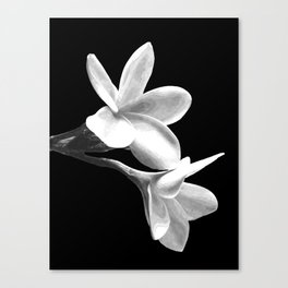 White Flowers Black Background Canvas Print