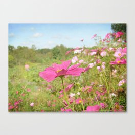 Cosmos in the field Canvas Print
