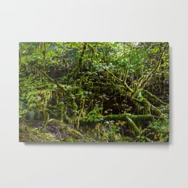 Deep in the rain forest Metal Print