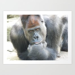 Lowland Gorilla in Deep Thought Art Print
