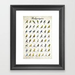 Budgerigar Colors Poster Framed Art Print