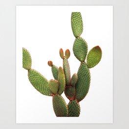 Cactus Photography Art Print