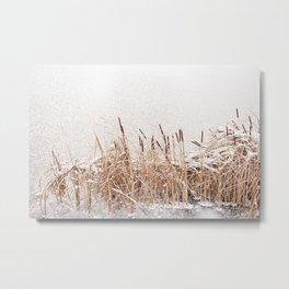 Typha reeds at frozen lake Metal Print