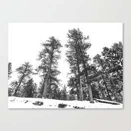 Snowscape Sky // Winter Trees Black and White Landscape Snow Ski Snowboard Photography Canvas Print