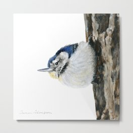 Cutie Pie the Nuthatch by Teresa Thompson Metal Print
